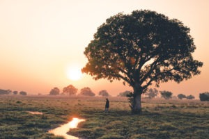 gesa luambe zambia sunset under tree