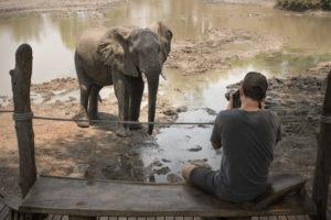 kanga camp mana pools elephant guest