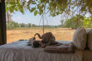 lower zambezi tusk and mane bedroom