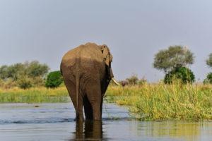 lower zambezi tusk and mane elephant zambezi