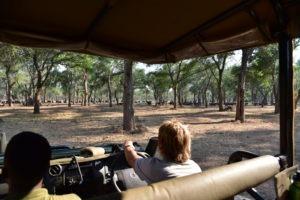 lower zambezi tusk and mane game drive