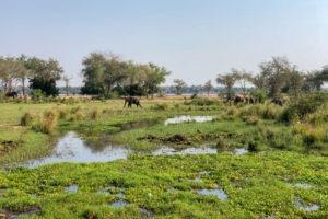 lower zambezi tusk and mane landscape elephant