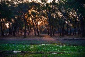 lower zambezi tusk and mane sunset