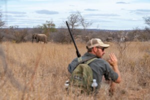 lowveld trails timbavati elephants walking