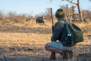 lowveld trails timbavati rhino walking wayne