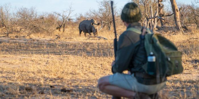 lowveld trails timbavati rhino walking wayne
