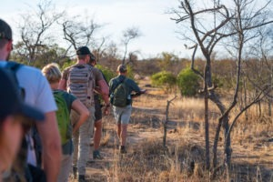 lowveld trails timbavati walking guests