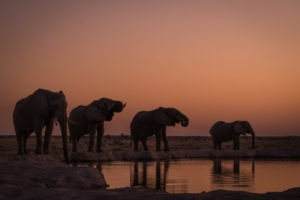 nxai pan four elephants sunset