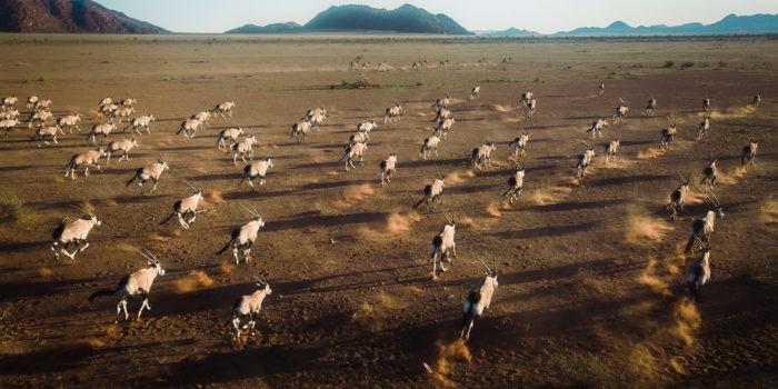 southern namibia wildlife photography oryx jason and emilie