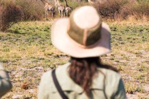 walking giraffe guests