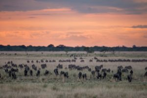 west zambia liuwa plains wildlife photography migration