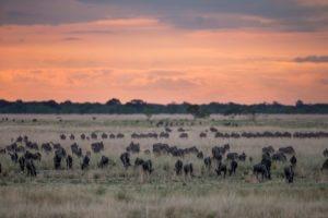 west zambia liuwa plains wildlife photography migration