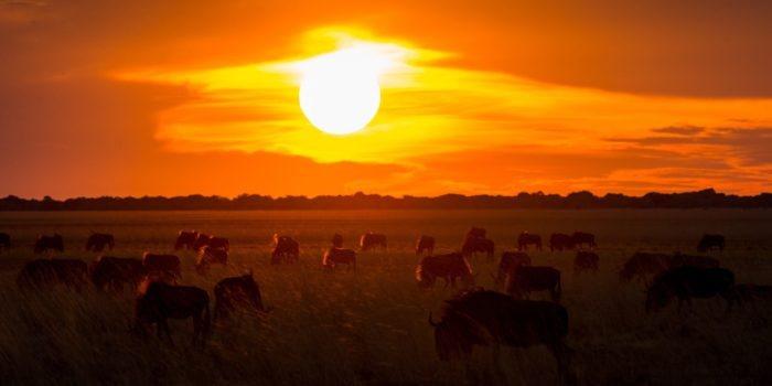 west zambia liuwa plains wildlife photography wildlife sunset