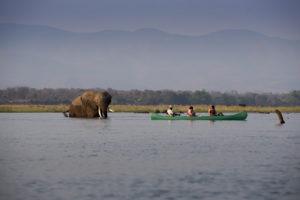 zambezi expeditions mana pools canoe elephant