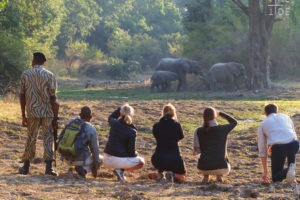 zambia Time Tide South Luangwa Walking Safari Andrew Macdonald