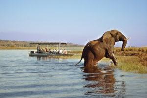 zambia livingstone boating safari