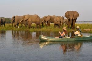 zambia lower zambezi sausage tree camp boating safari