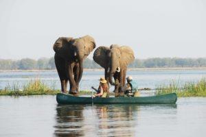 zambia lower zambezi sausage tree camp canoe elephtant