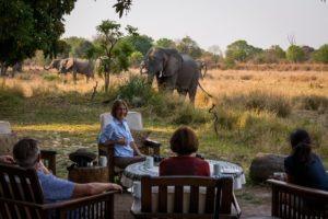 zambia luangwa valley elephants and coffee