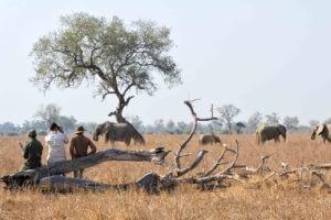 zambia luangwa valley walking safari