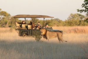 zimbabwe hwange lion game drive safari big five 1
