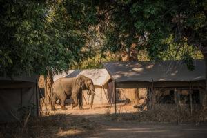 zimbabwe mana pools elephant camp mobile safari