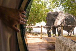 zimbabwe mana pools elephant viewing from tent