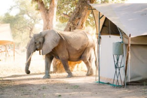zimbabwe mana pools elephants and camping