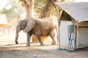 zimbabwe mana pools elephants and camping