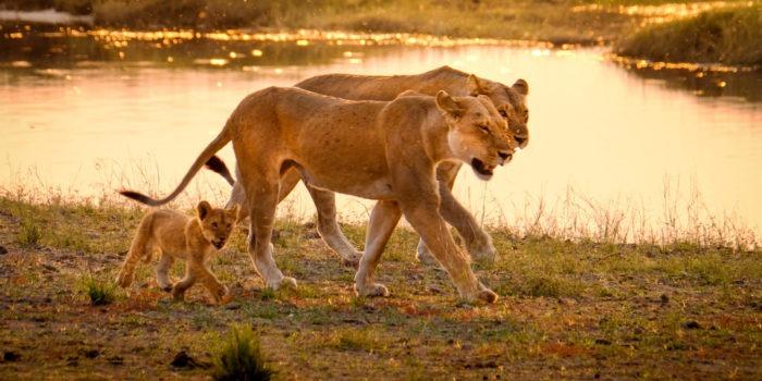 Blog Doris Fotosafari Botswana15