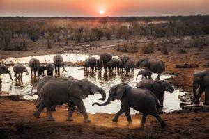 Namibia Etosha Jason