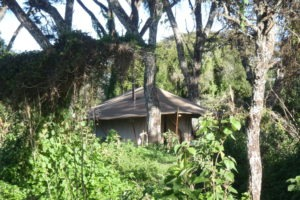 mysigio camp tanzania lounge tent