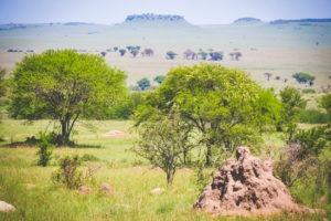 tanzania safaris landscape