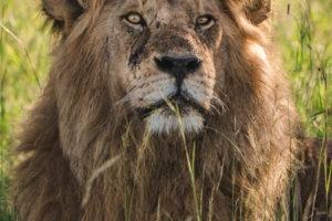 Blog Serengeti5