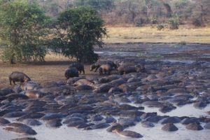 chada katavi hippo