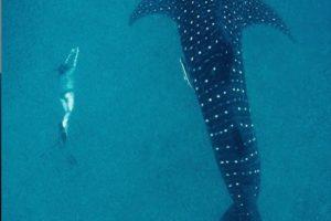 chole mjini mafia swimming sharks
