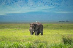 entamanu ngorongoro crater elephant