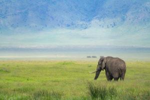entamanu ngorongoro elephant crater