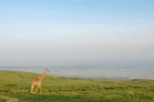 entamanu ngorongoro giraffe view