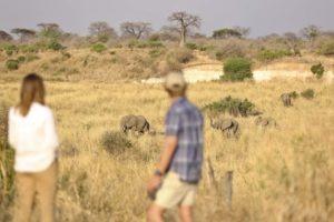 ikuka camp ruaha walking elephants