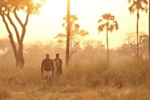 ikuka camp ruaha walking safaris