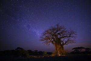 kichaka ruaha stars