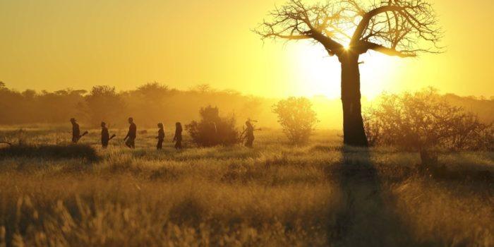 kichaka ruaha walking baobab