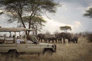 kigelia ruaha elephants