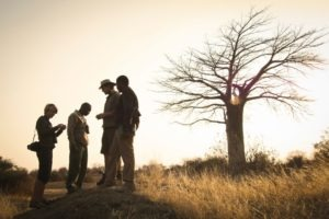 kigelia ruaha walking safari guests