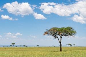 lamai serengeti landscape
