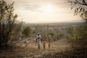 sand rivers selous walking safari