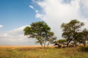serengeti safari camp landscape