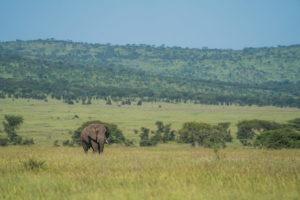 wayo walking camp serengeti elephant plains