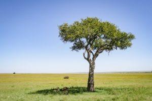 Masai Mara Kenya1